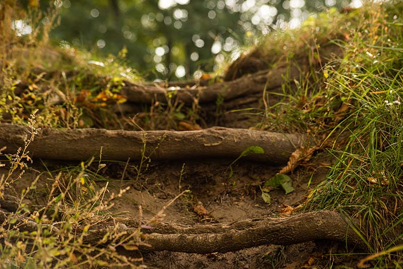 Can Tree Roots Harm a Foundation?